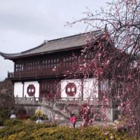 たつの市御津自然観察公園 世界の梅公園