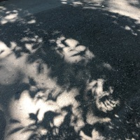 オサンポ walk - 葉陰 leaves make shadows