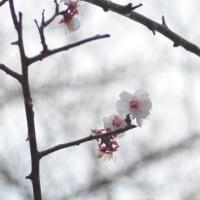 隅田公園で撮影してきました