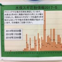 水俣スギ花粉情報2017-5