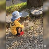 お散歩〜〜石集め
