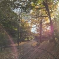 Enjoying fall leaves and my job 紅葉三昧&仕事三昧