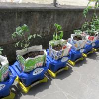 野菜の苗を植えたよ