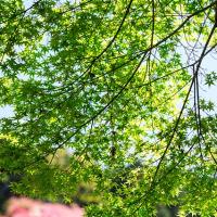 2017 九十九島を眼下に長串山のツツジ 2 《佐世保市鹿町》