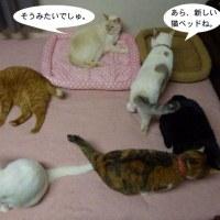 新しい猫ベッド
