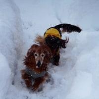 雪国ing④