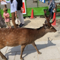 奈良に行ってきました!