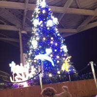 えのすいのクリスマスツリー