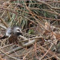近くの公園~早淵川の野鳥 2月18日