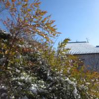 2月20日(月)季節は行きつ戻りつ・・・