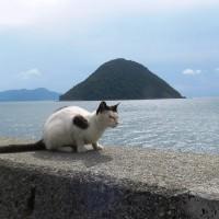 佐柳島の埋め墓と参り墓