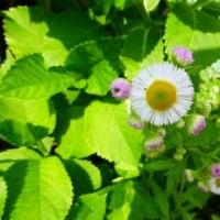 宝島で焼肉ランチ・・・野に咲く花を見つけた