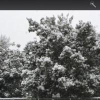 雪になりました…(。-_-。)