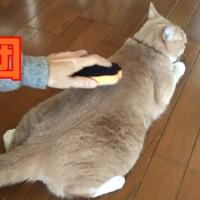 猫・犬グッズ『マッサージしながら抜け毛取り』を使ってみた