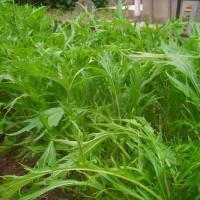 庭の夏野菜