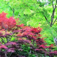 奈良・新緑の正暦寺