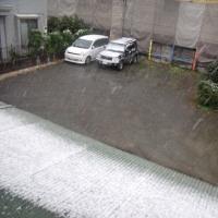 初雪なので・・