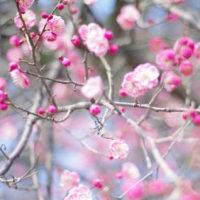 春がもうそこに……