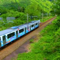 タニウツギと電車