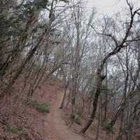 湯の町暮らしに 春まだ浅き里山の雑木林を歩いて