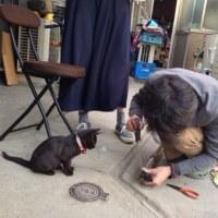 孫と猫と高枝切りバサミ