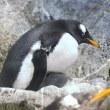 ペンギンのヒナのお仕事2(閲覧注意)