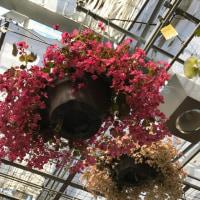 世界に一つだけの花、花、花。