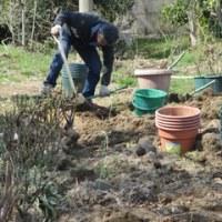 耕作放棄地からバラ園へ  2017.3. 26
