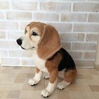 ビーグル犬  びぃちゃん (メモリアル)