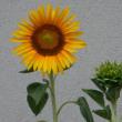 カンカン照りの中の花めぐり