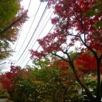 広島 三滝 で、紅葉狩り
