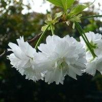 4月末から5月にかけて咲いていた我が家の花