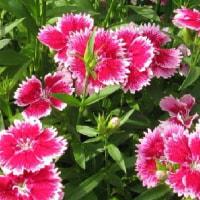 今日の花と空