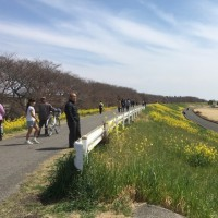 数年ぶりの熊谷桜堤
