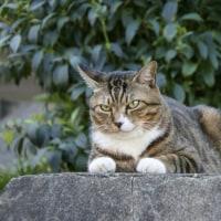 ネコの地震予知の超能力