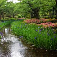 兼六園の風景と植物
