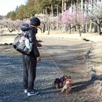 公園散歩は楽しいね
