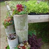 竹に植えた花と多肉植物<正ちゃんの花と緑の旅9>