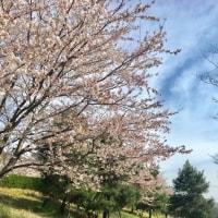 桜の停留所