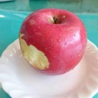 社長にリンゴをもらったよ♪