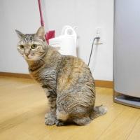 猫族の年齢と体重