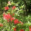 蓼科のお花