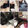 ジジィの枕 猫も枕がいるのね