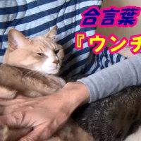 猫の合言葉『ウ◯チはトイレ』【猫日記こむぎ&だいず】2017.05.16