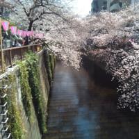 花見(目黒川)