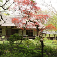 新緑の浄智寺