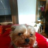 妹の犬 ハムちゃん