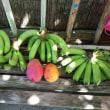 庭で出来たフルーツ