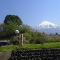 今日は。、富士山自然の森で観察会でした。のんびりとした一時を過ごしました。