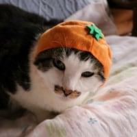 ニャンコの被り物「ねこフルーツちゃん」知ってます!?
